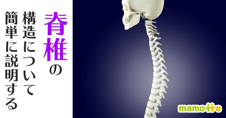 背骨の構造
