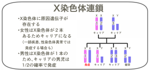 X染色体連鎖
