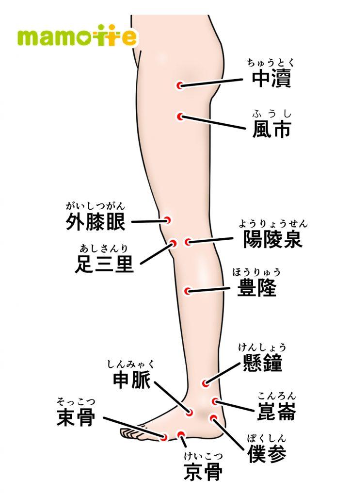 ツボ下肢側面