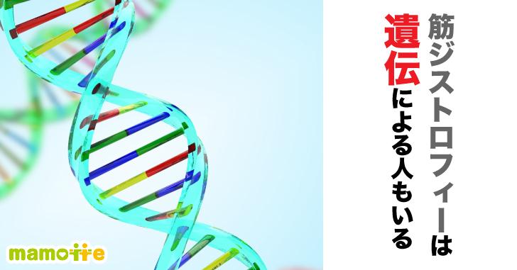 筋ジストロフィーの遺伝
