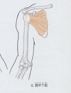 肩甲下筋のイラスト