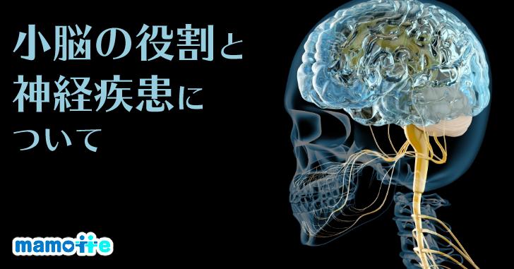 脊髄小脳変性症の役割